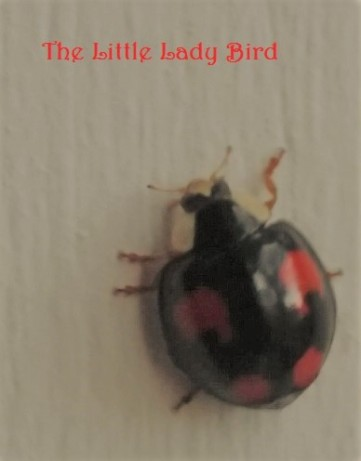 little-lady-bird-pic